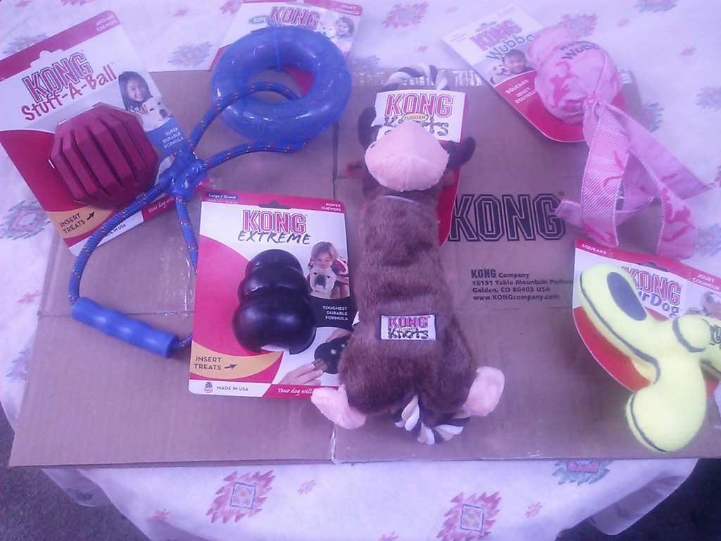 June 21, 2013: I shared with the KONG Company how helpful its products have been in enabling Shayna's dramatic weight loss.  They sent her this big gift basket of more KONGS and toys to help keep facilitating her good health, and training pleasure.