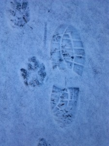 31Jan14 Footprint pawprint