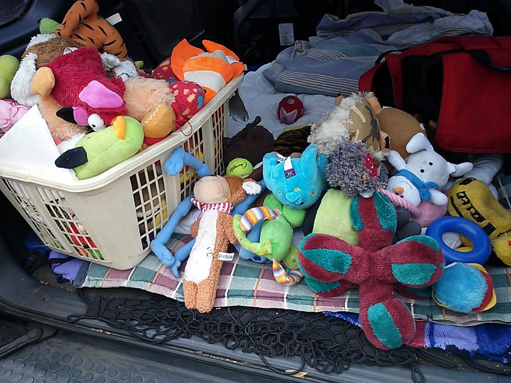 Most of Shayna's 116 toys, in the back of my truck. I gave some to neighbors, and donated the rest to the SPCA and Service Dogs of Virginia.